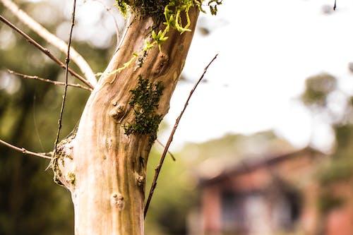 Ingyenes stockfotó fa, fatörzs, környezet témában
