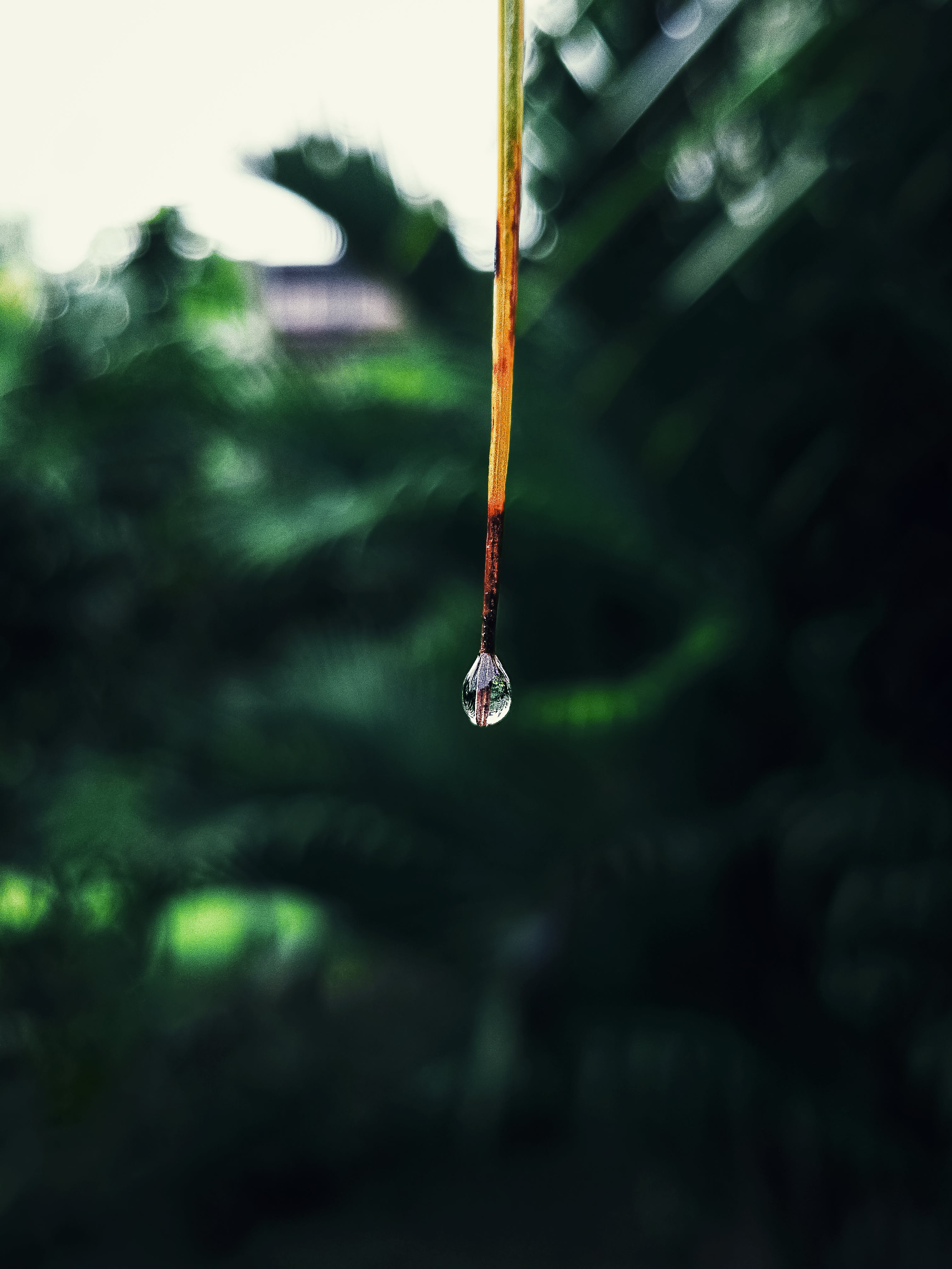 Close-up Photo Of Drop Of Water