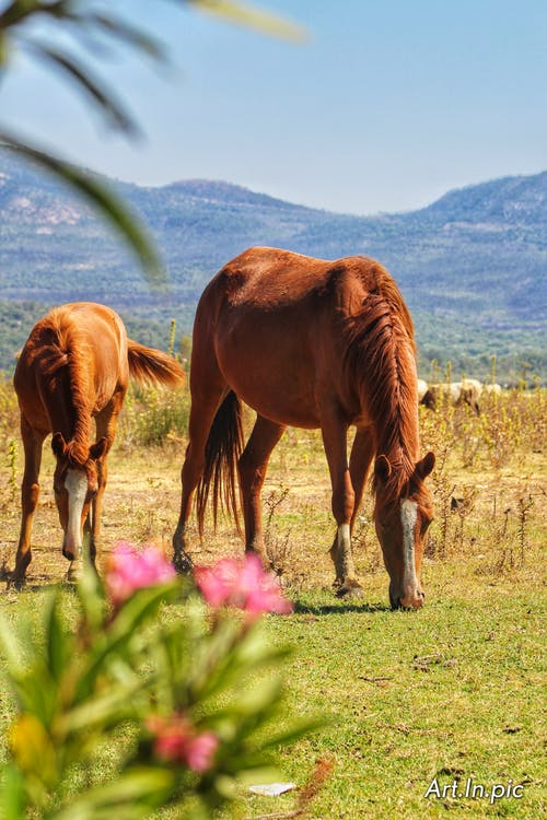 Free stock photo of animal, animals, beautiful flowers