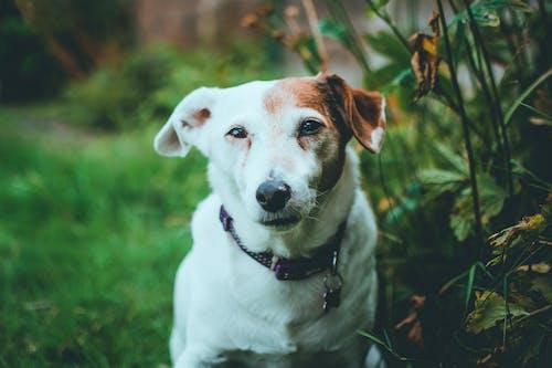 คลังภาพถ่ายฟรี ของ น่ารัก, น้อย, ลูกสุนัข, สัตว์