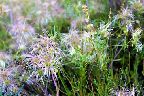 Darmowe zdjęcie z galerii z dzicz, kwiaty