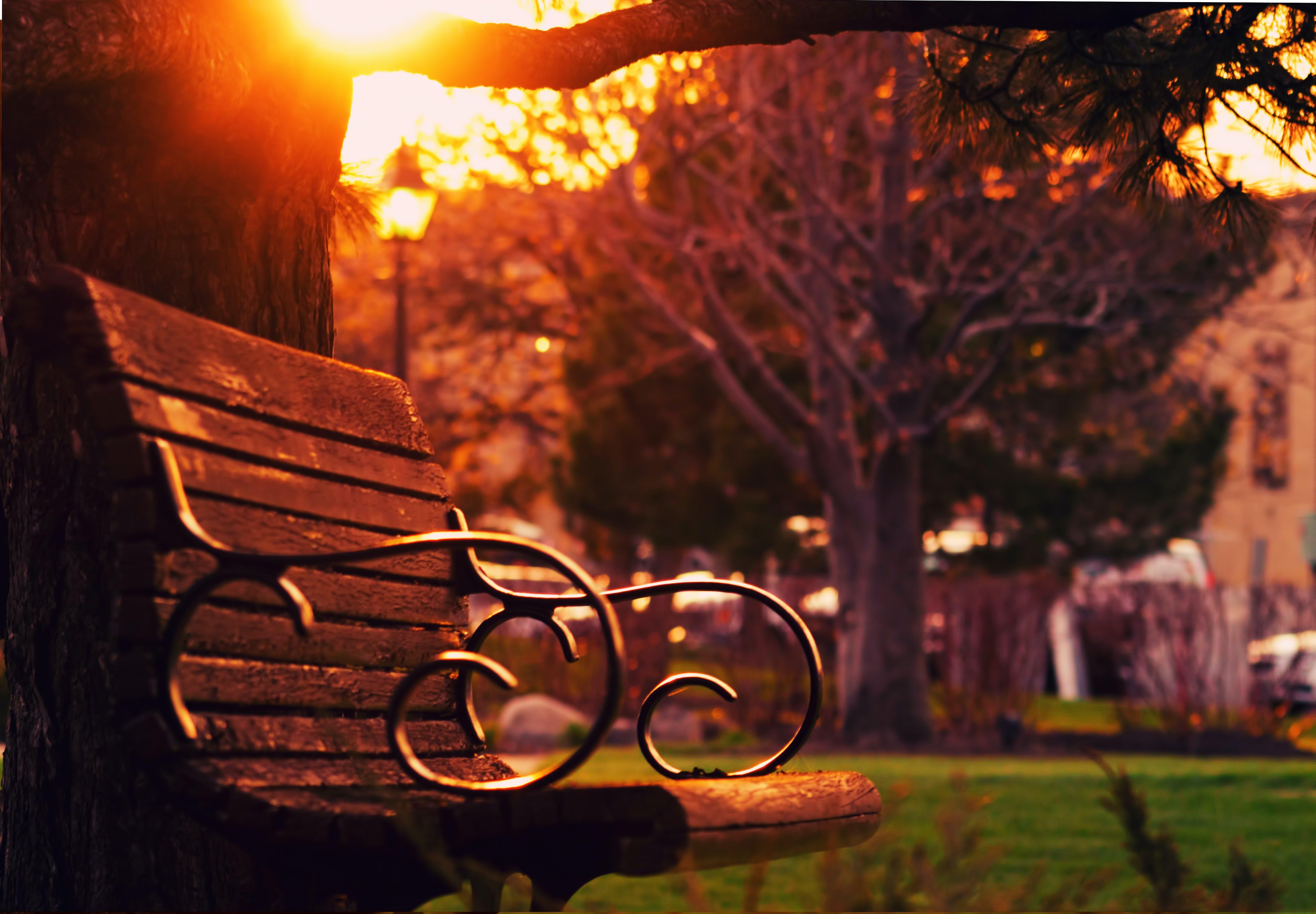 คลังภาพถ่ายฟรี ของ ตะวันลับฟ้า, ทำด้วยไม้, ปาร์ค, พระอาทิตย์ขึ้น