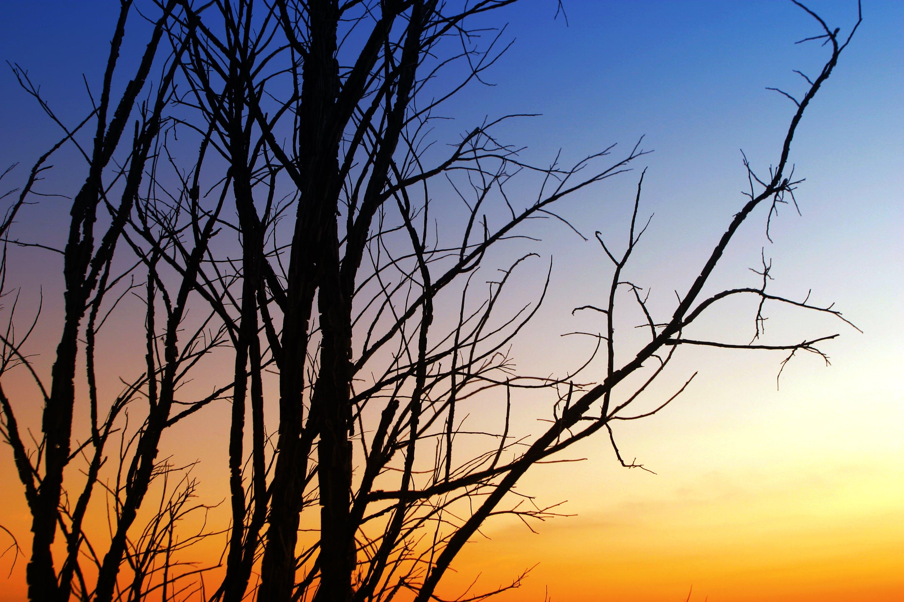 Безкоштовне стокове фото на тему «дерево, з підсвіткою, Захід сонця, небо»
