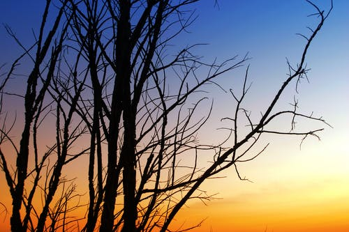 Silhouette Of Withered Tree During Sunset