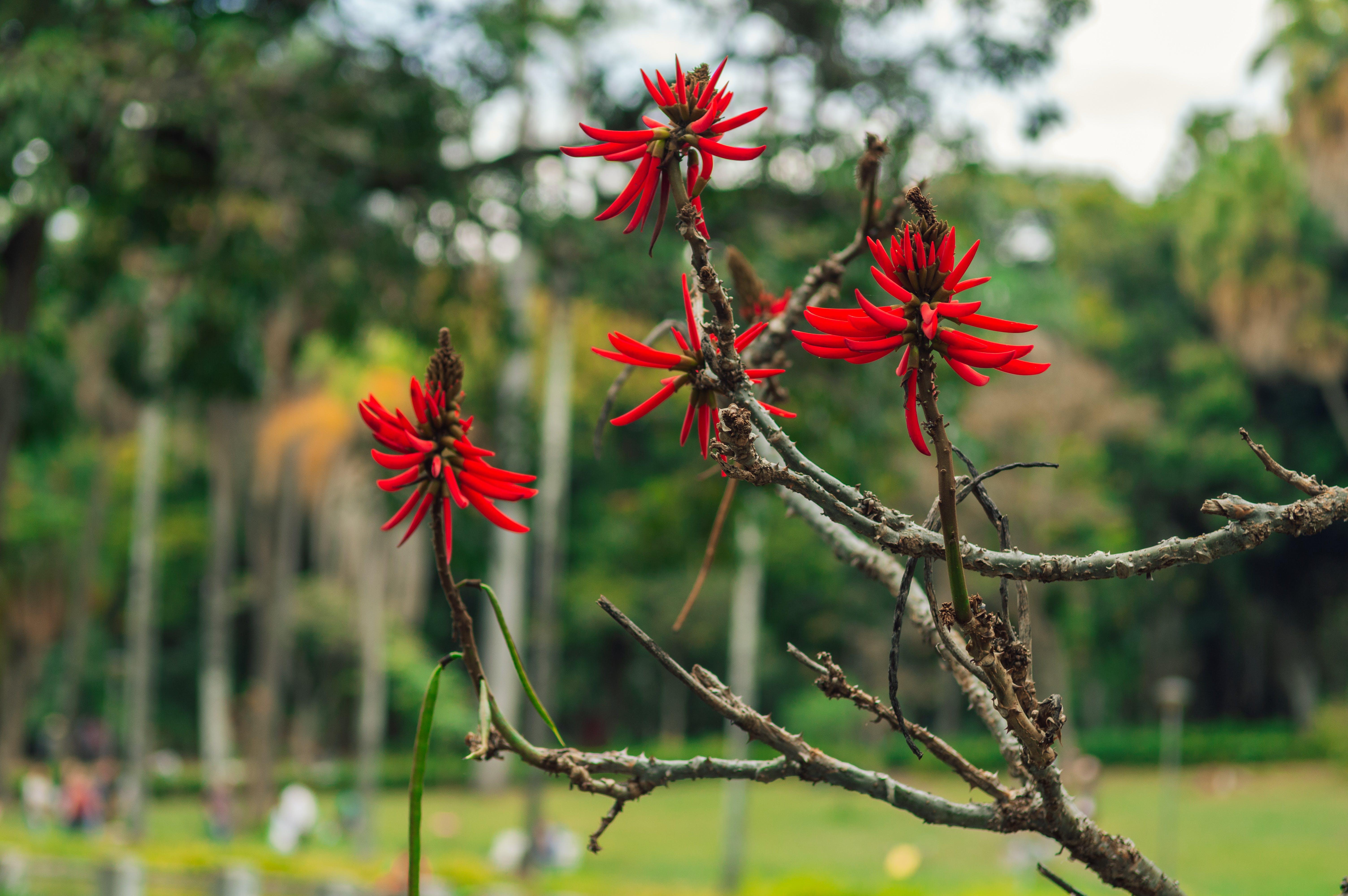 分公司, 植物群, 綻放, 花 的 免费素材照片