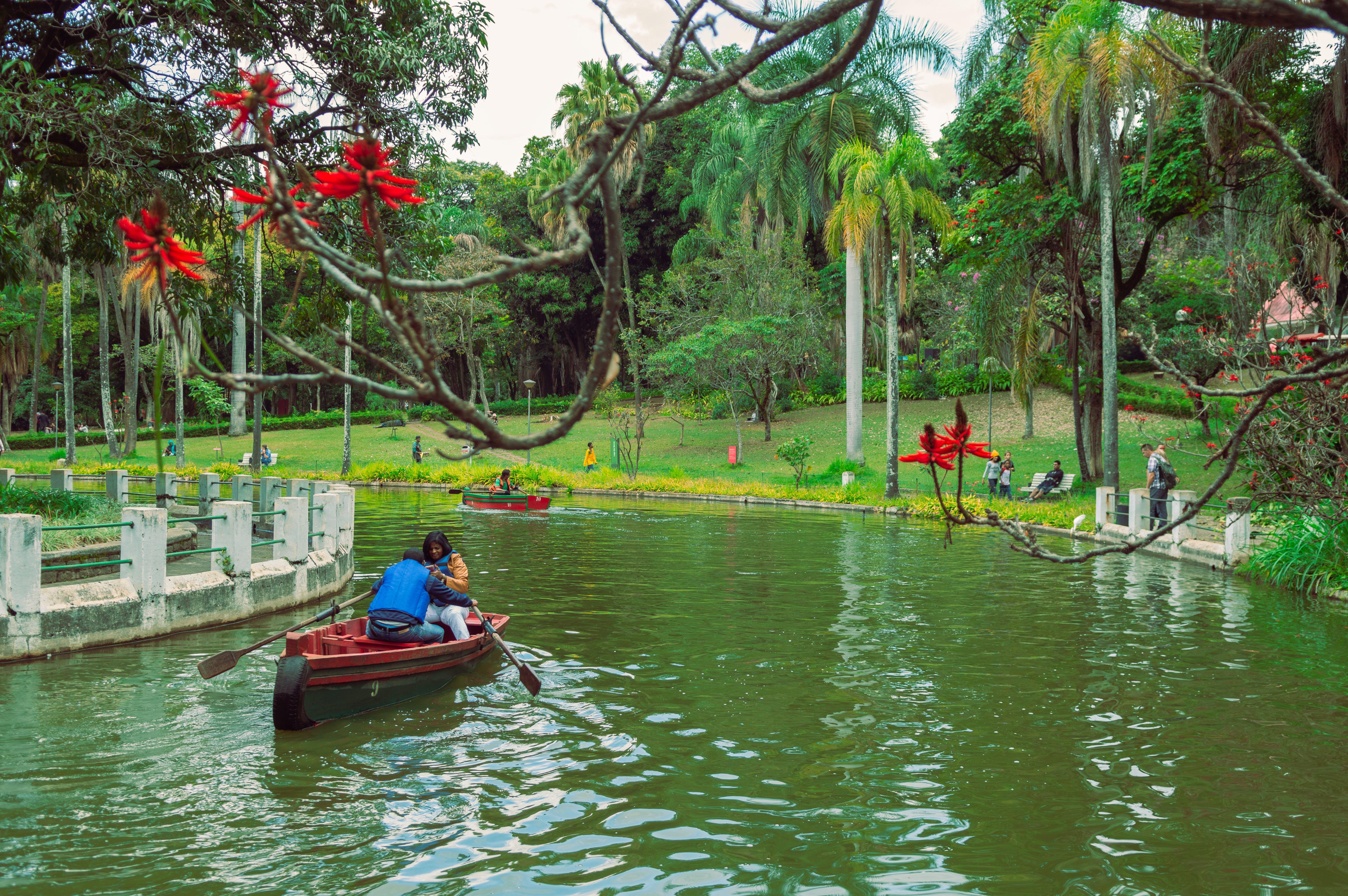 Foto d'estoc gratuïta de arbre verd, arbres, barca, canoa