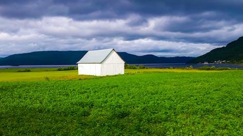 Imagine de stoc gratuită din câmp de iarbă, natură, nori