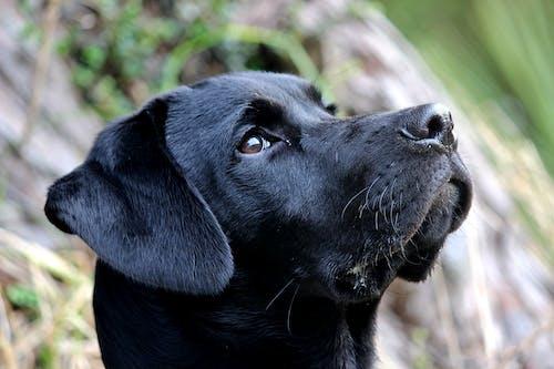 #狗 的 免费素材照片