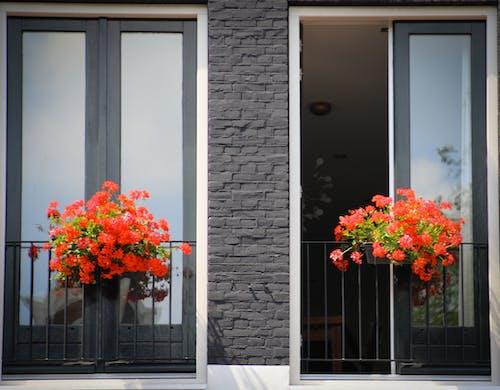 Imagine de stoc gratuită din flori, intrare