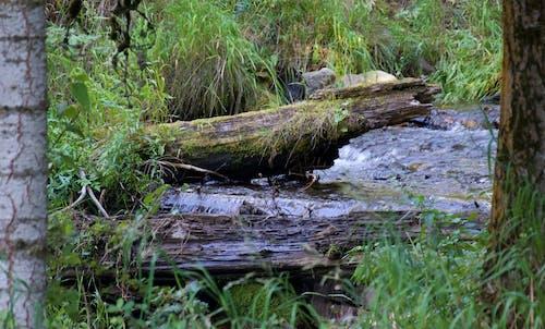 Free stock photo of logs