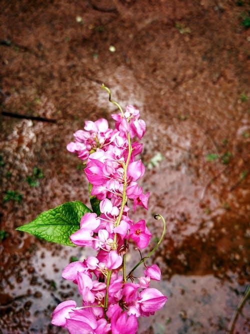Ilmainen kuvapankkikuva tunnisteilla kauniit kukat, kimppu, kukkakimppu, pinkki kukka