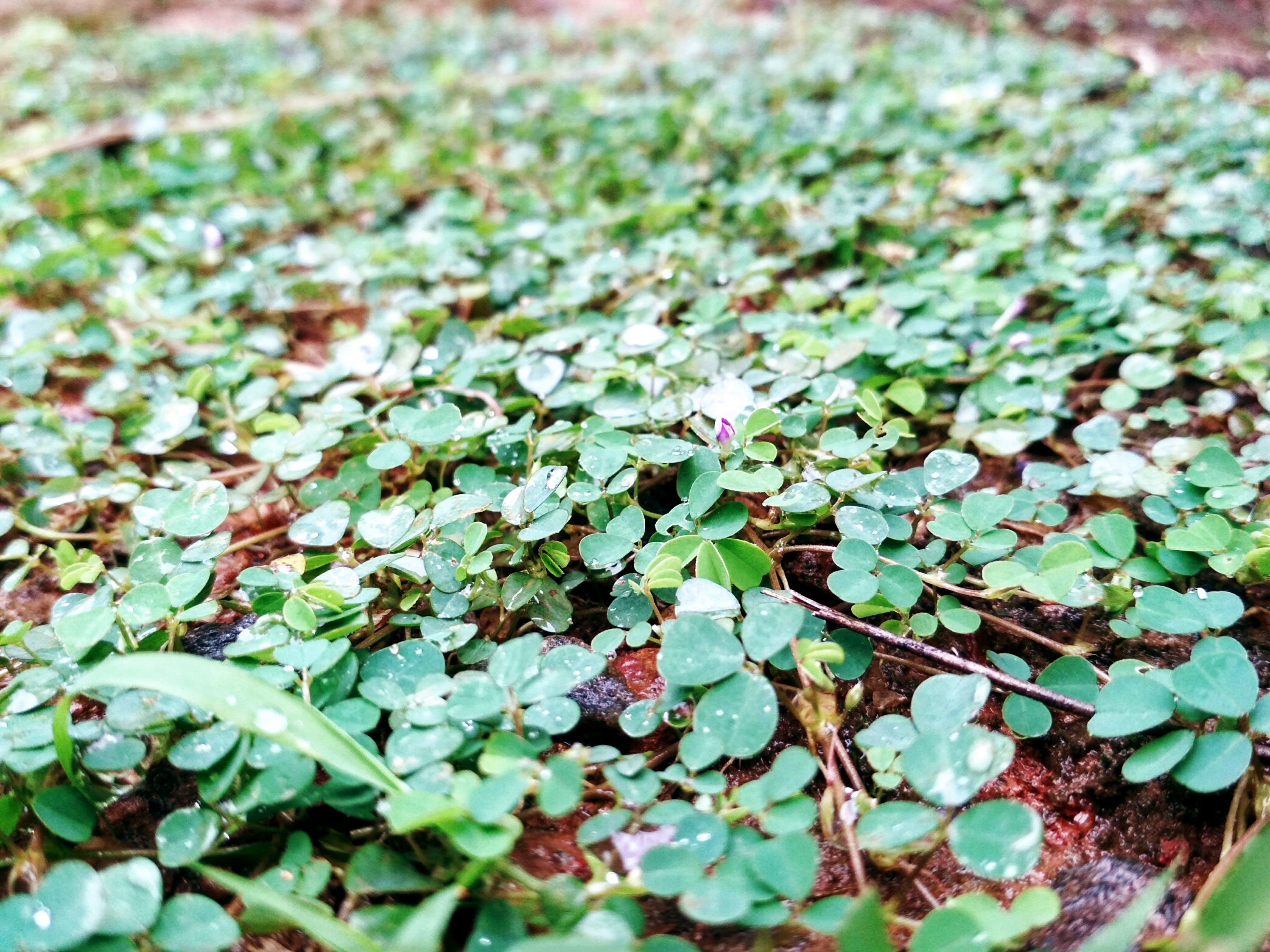 Free stock photo of dark green plants, natue, rain