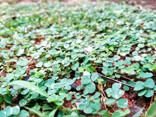 Gratis lagerfoto af mørkegrønne planter, regn