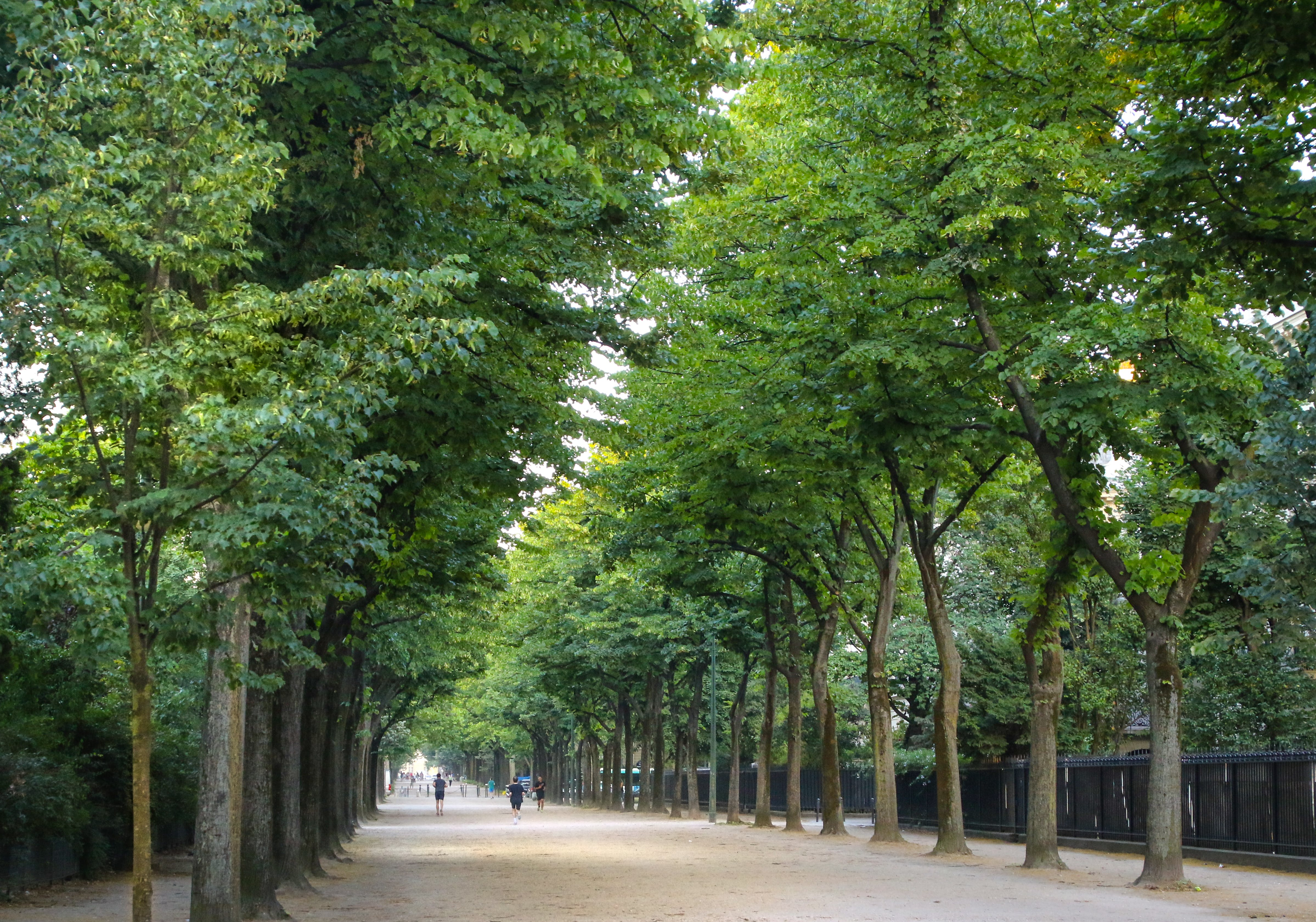 Free stock photo of nature, trees, path, park