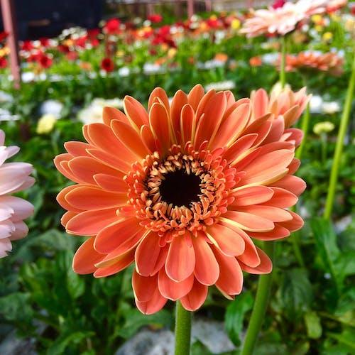 Ảnh lưu trữ miễn phí về cánh hoa, hệ thực vật, hoa, Thiên nhiên