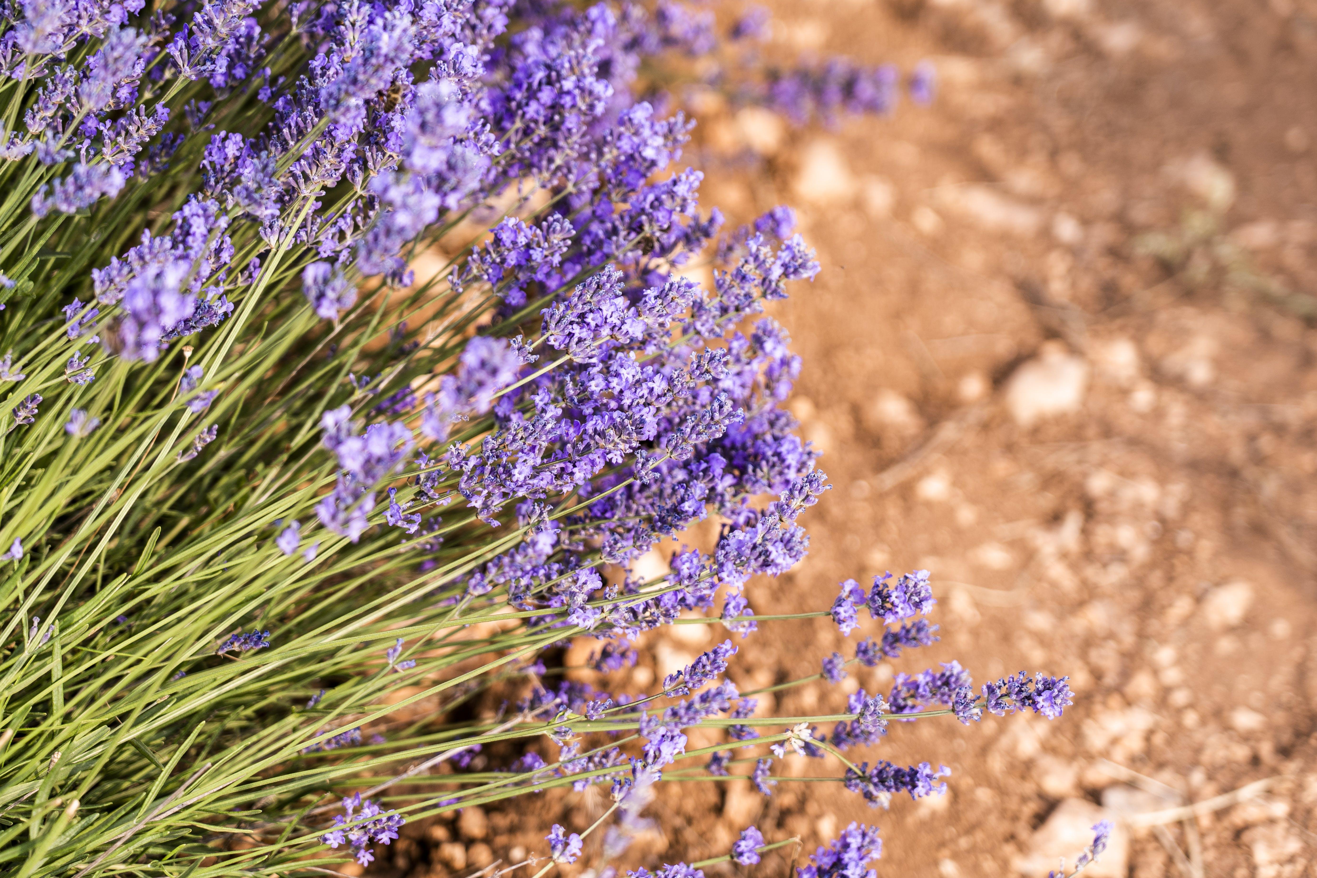 Cluster of Purple Flowers