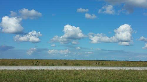 Free stock photo of everglades