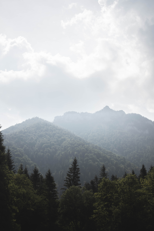bäume, berge, dämmerung