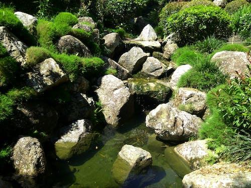 Foto profissional grátis de água, corrente, ecológico, floresta