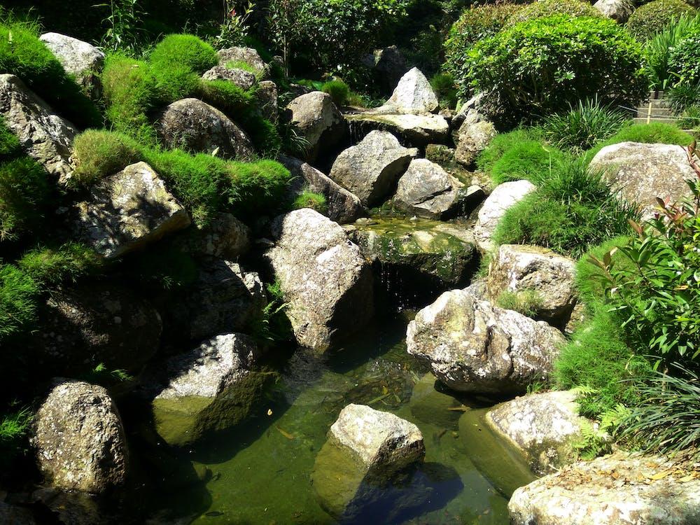 Free stock photo of green, jungle, natural