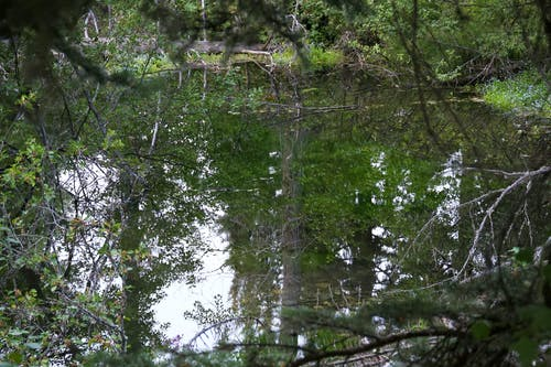 Free stock photo of forest, pond