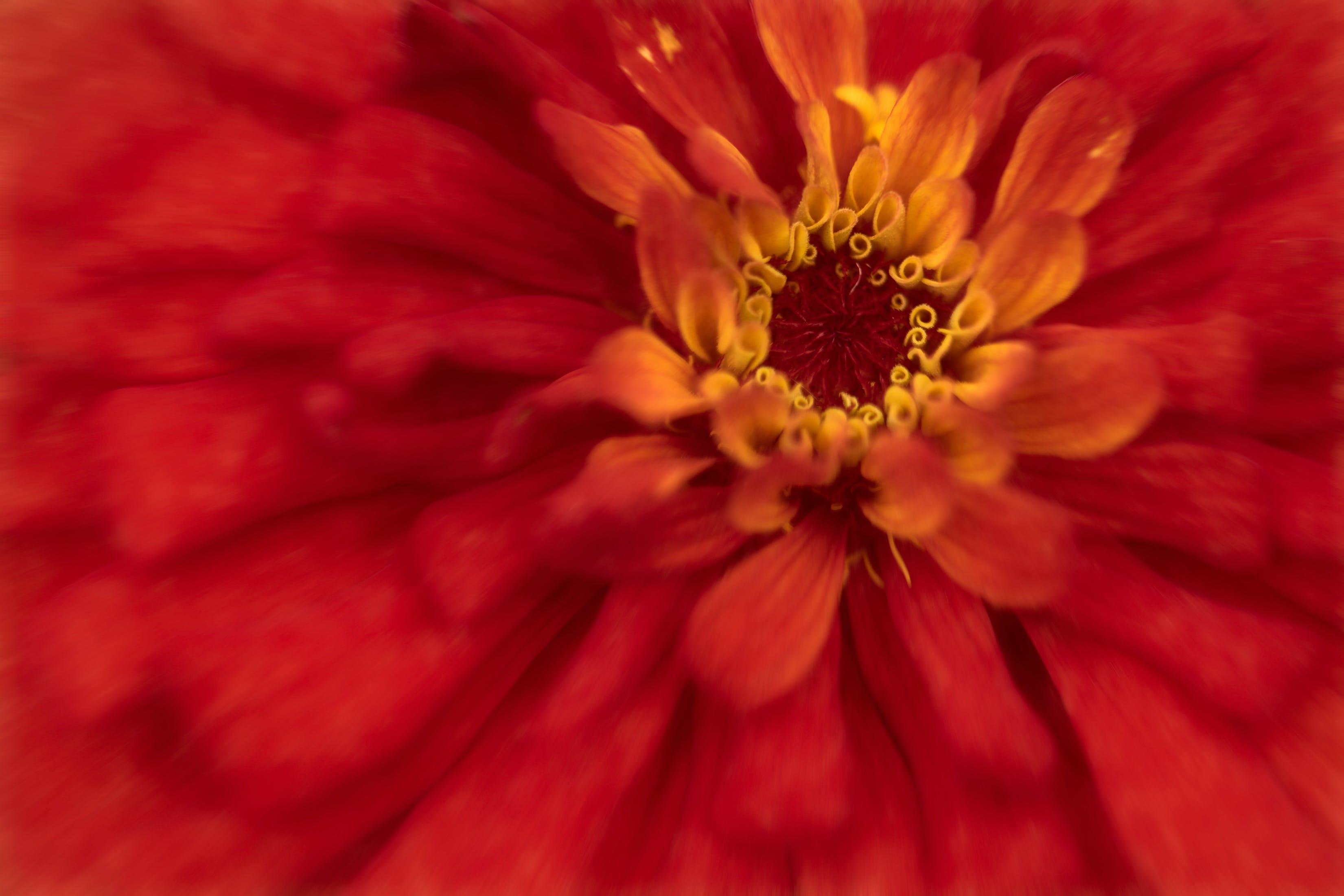 Безкоштовне стокове фото на тему «#flowers, #macro, #nature»