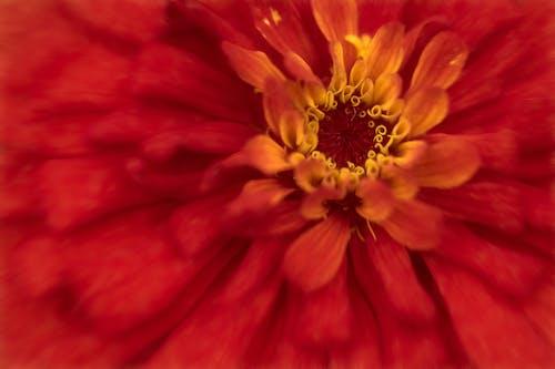 Ảnh lưu trữ miễn phí về # hoa, #macro, #thiên nhiên