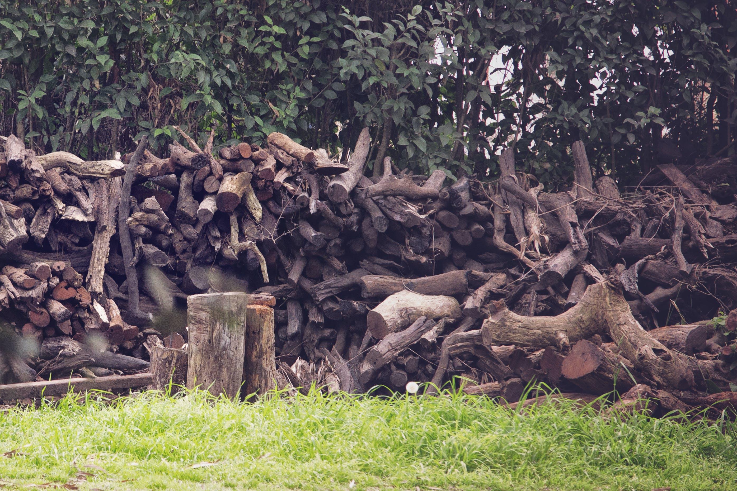 Free stock photo of woods