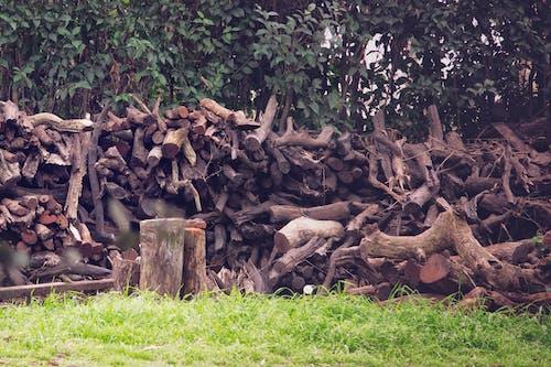 Ảnh lưu trữ miễn phí về gỗ