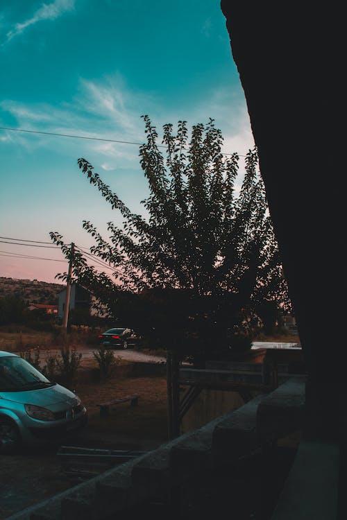 나무, 녹색, 맑은 하늘