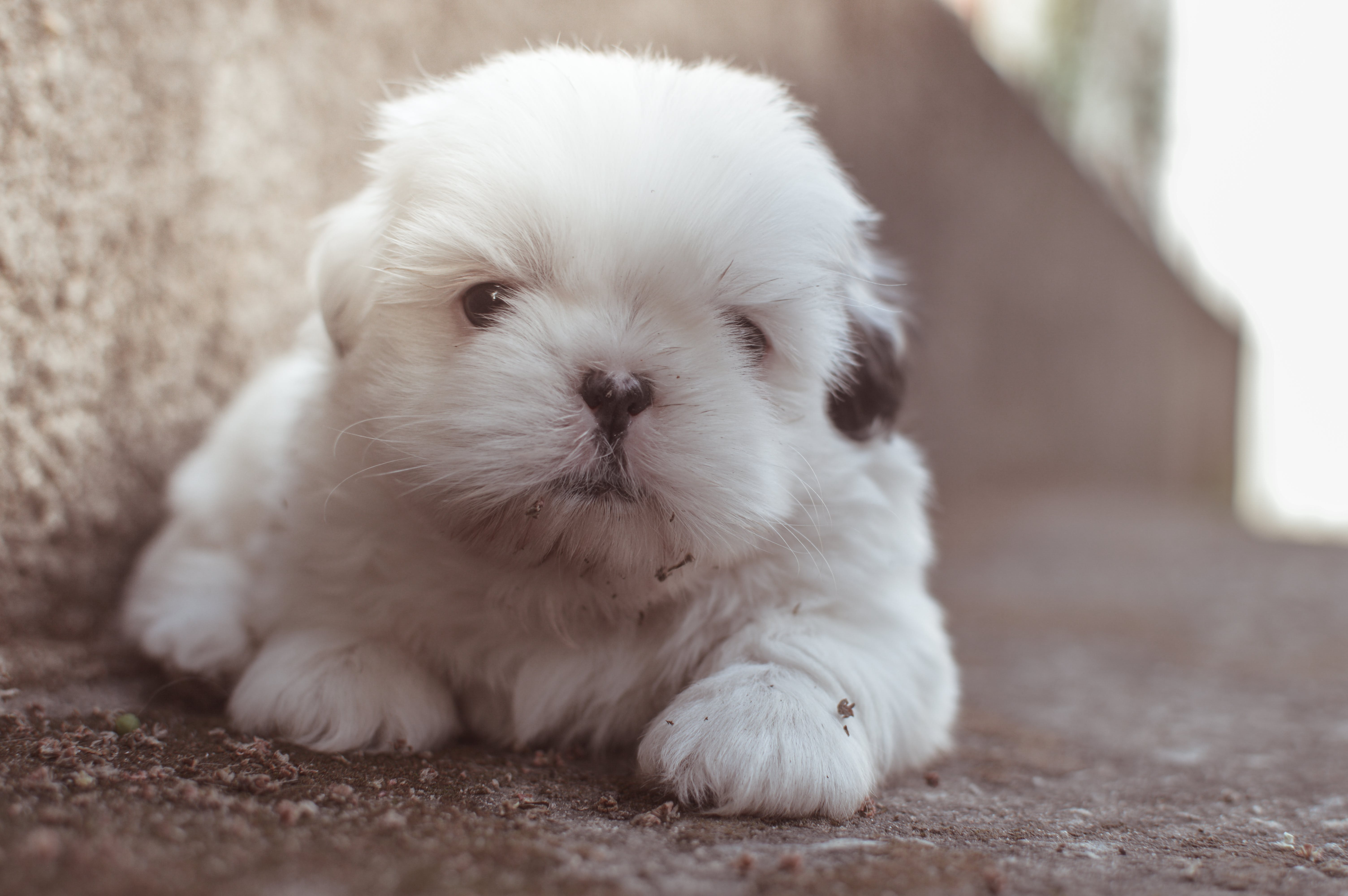 Closeup Photography of White Long Coated Puppy