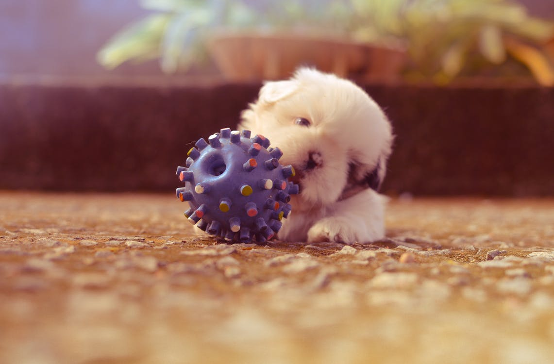 Puppy Playing With Spiky Ball Toy Selective Focus Photography