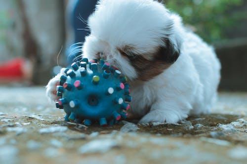 Imagine de stoc gratuită din câini, cățeluș, cățeluși, detaliu