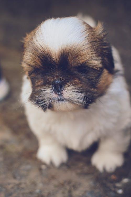 Imagine de stoc gratuită din animal, animal de casă, animale de casă, câini
