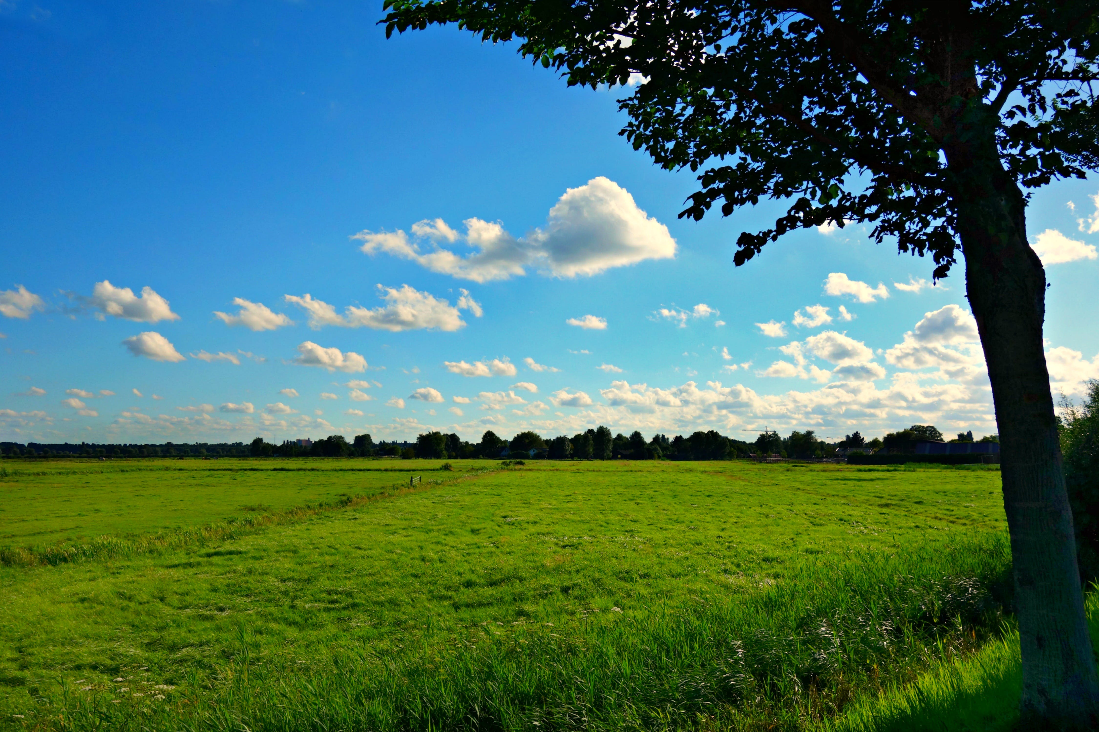 of clouds, countryside, field, grass