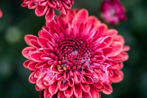 Foto profissional grátis de água, broto, centro, flor