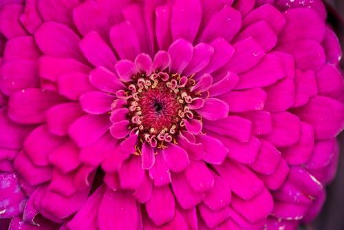 Foto profissional grátis de broto, flor, lilás, macro