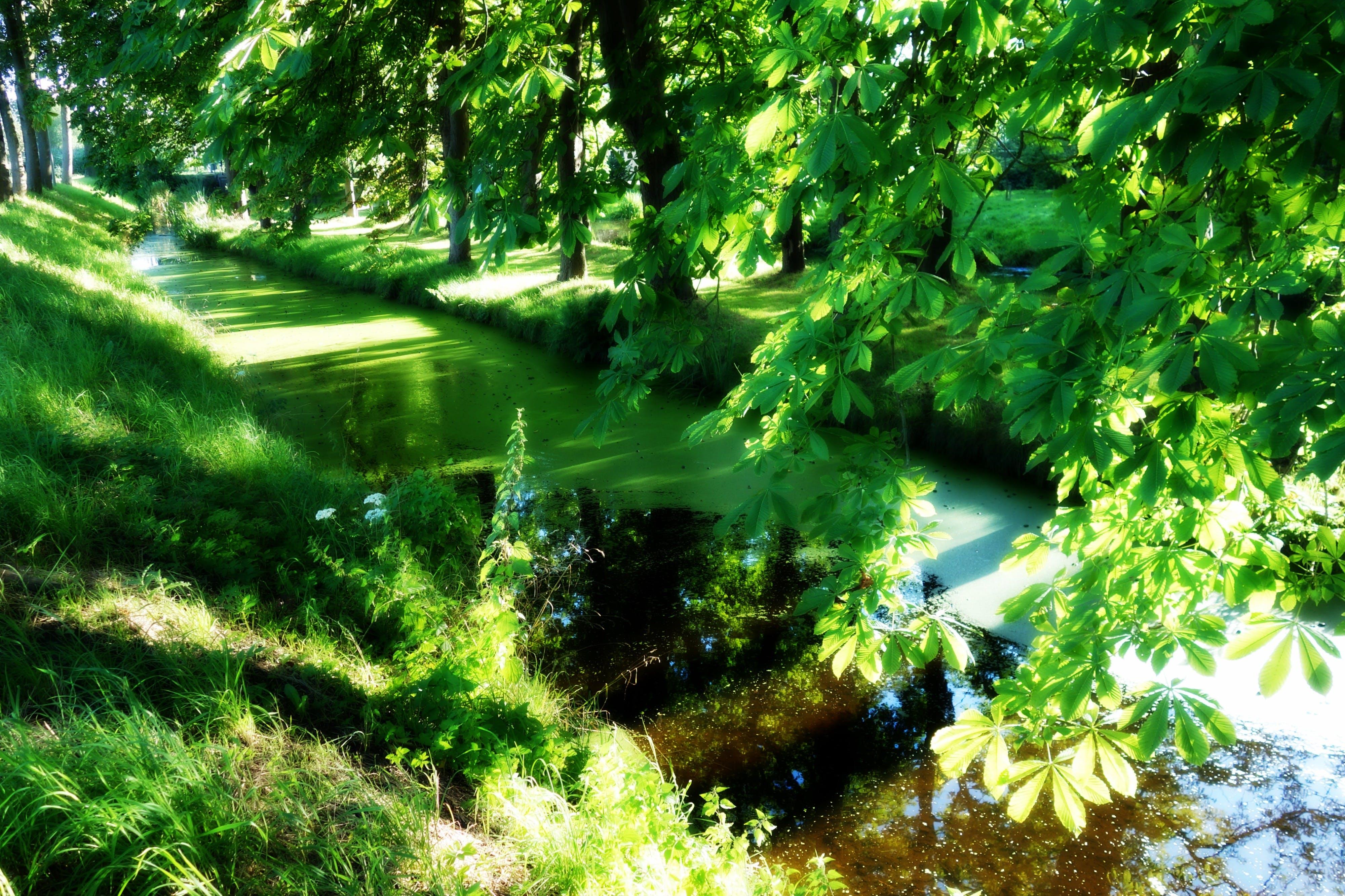 Free stock photo of landscape, water, sunshine, foliage
