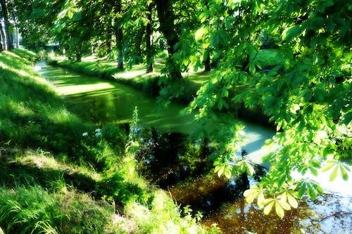 Free stock photo of bright, duckweed, foliage, landscape