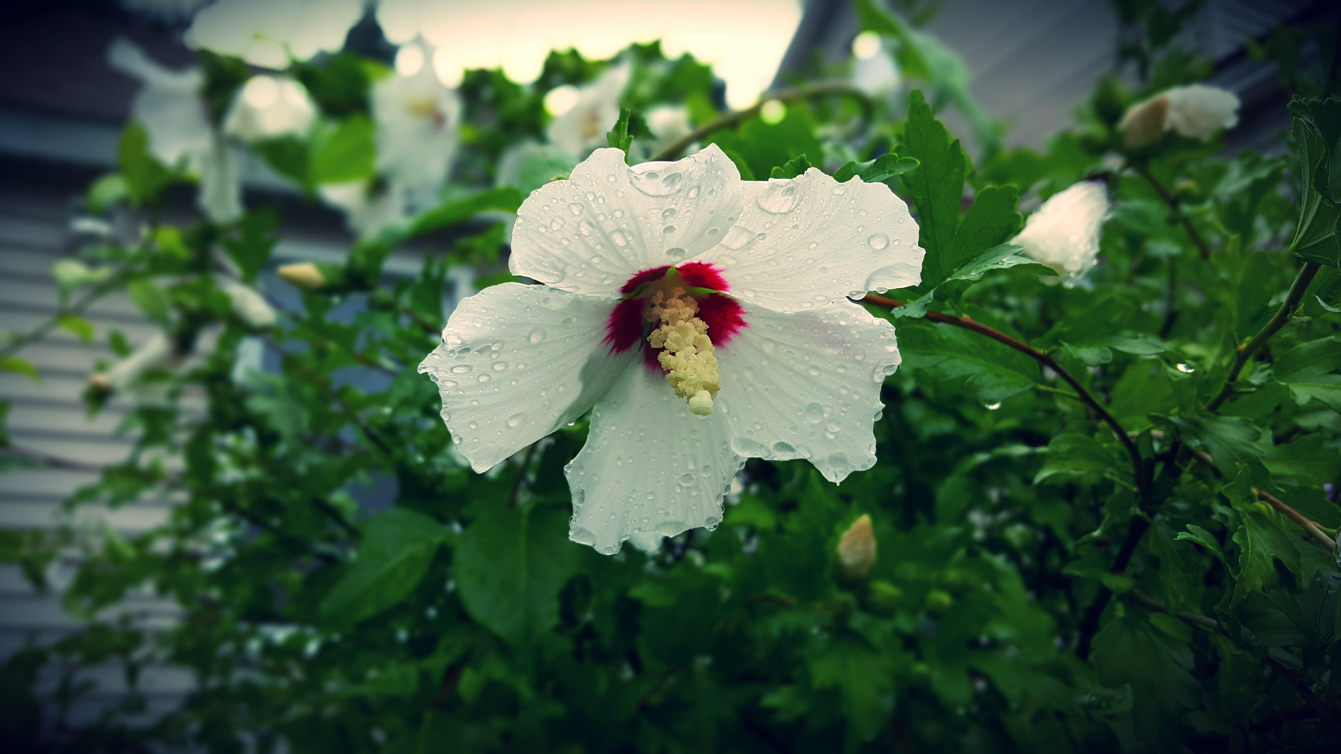 Kostenloses Stock Foto zu baum, blühen, blume, blütenblätter