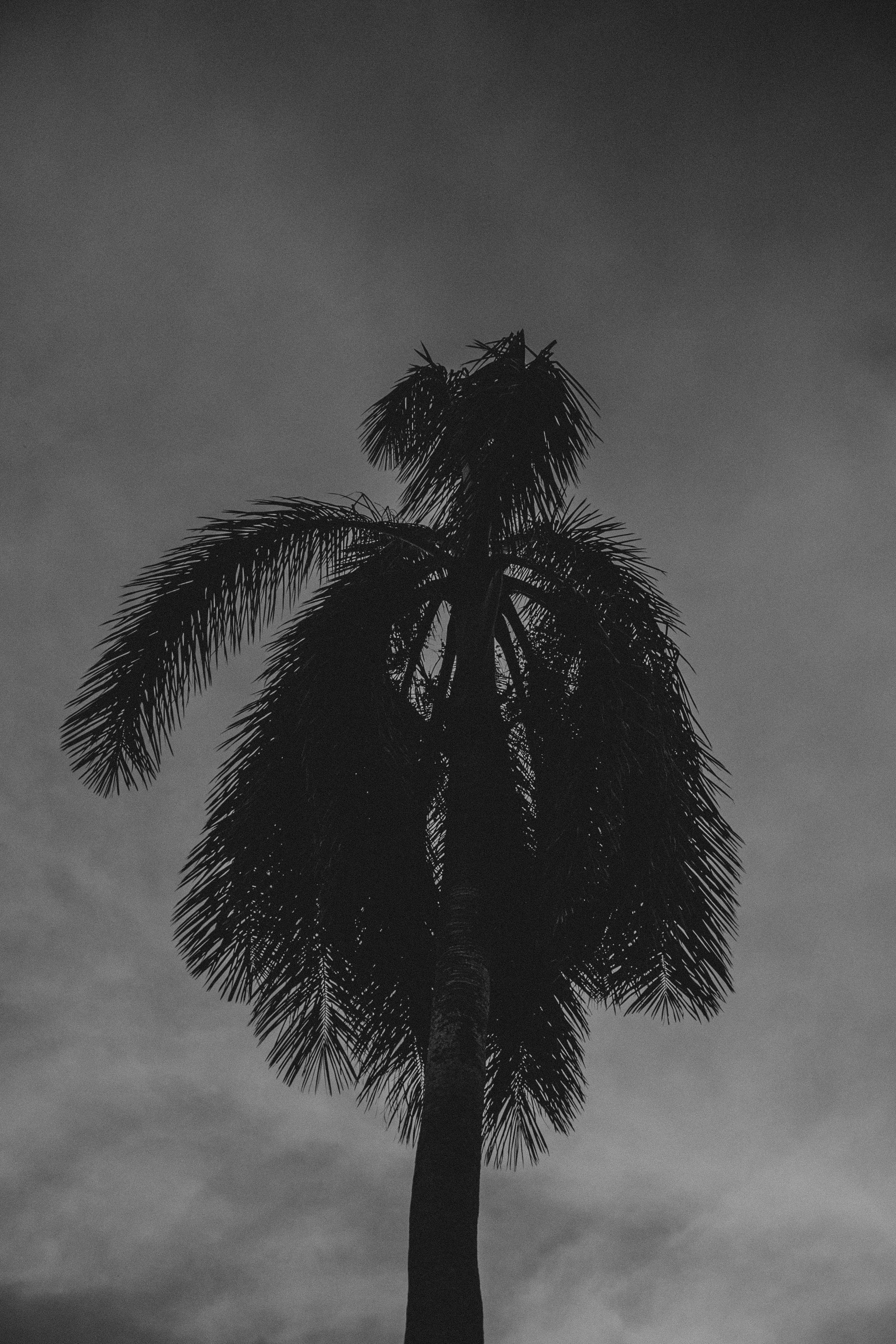 Gray Scale Photography of Tree