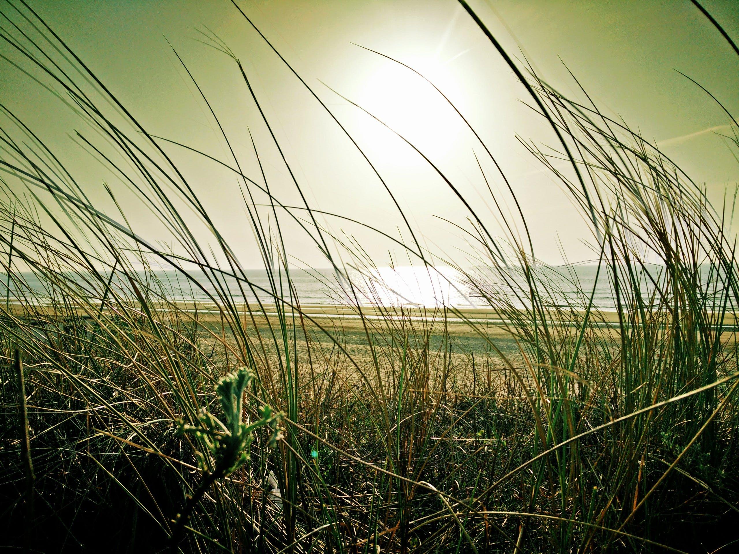 Imagine de stoc gratuită din apă, cer, faleză, iarbă