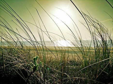 Green Grass Near Beach Under the Sun