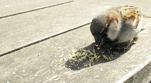 먹는, 빵, 참새의 무료 스톡 사진