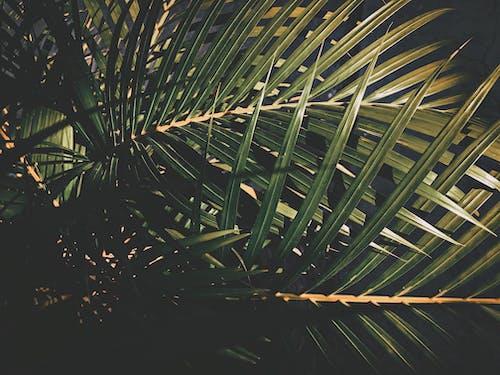 굿 모닝, 녹색, 일상적인, 자연의 무료 스톡 사진