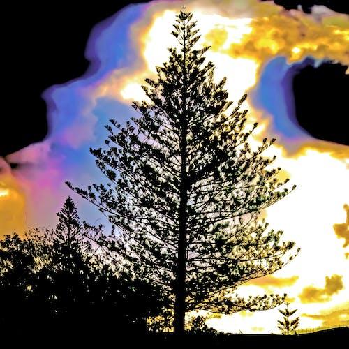 Kostnadsfri bild av Adobe Photoshop, starka färger, svart, träd