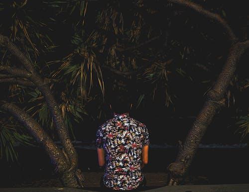 Kostnadsfri bild av mörk, oljefärg, Palmer, strand