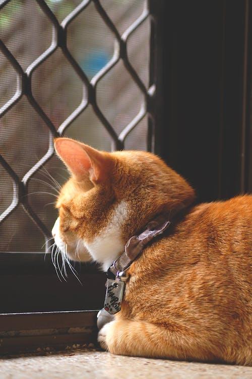 Kostnadsfri bild av apelsin, katt, pott