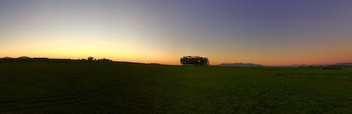 Photos gratuites de arbres, aube, ciel, ciel orange