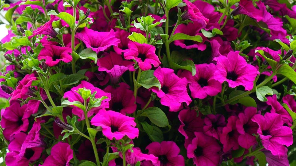 botaniczny, bukiet, fioletowy